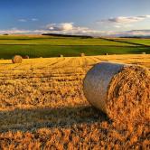/images/lapiazzadegliagenti/settore_agrario.jpg